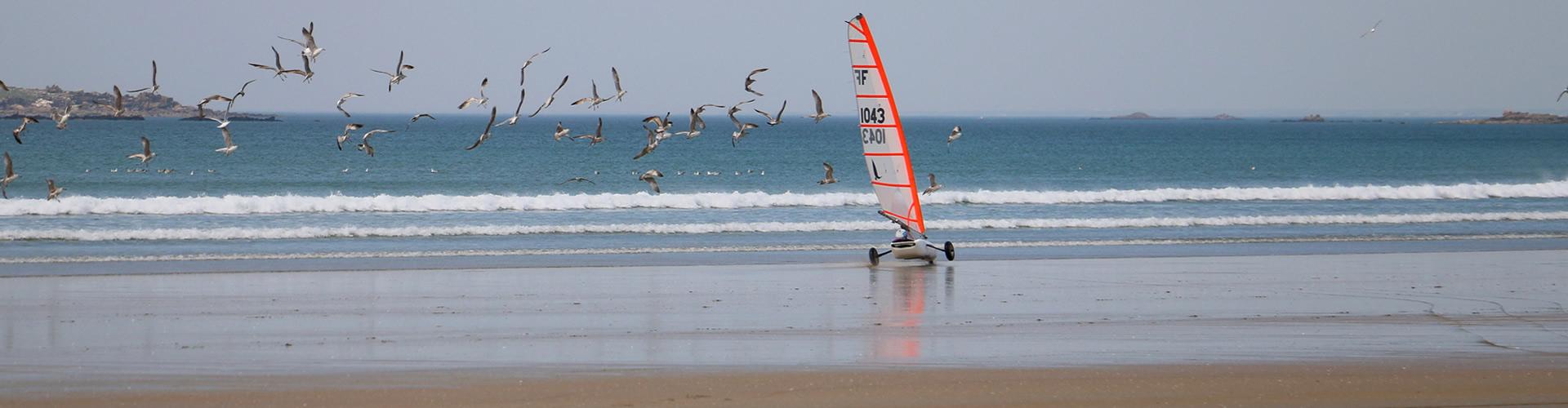 seagull_char_voile_slide_2